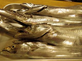 20151026 太刀魚2.jpg