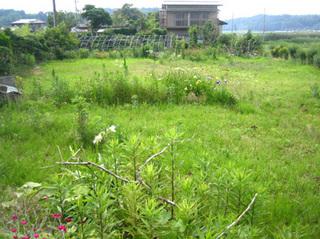 20110701 田舎畑.jpg