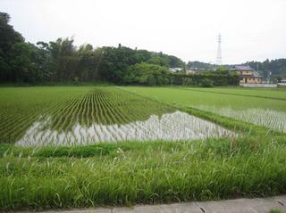 20130502 とある日の水田.jpg