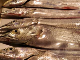 20131216 太刀魚.jpg