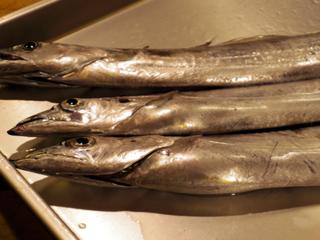 20141117 太刀魚.jpg