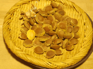 20150603 杏種.jpg