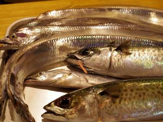 20150727 太刀魚釣行.jpg